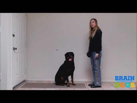 brain-training-for-dogs---the-best-dog-training