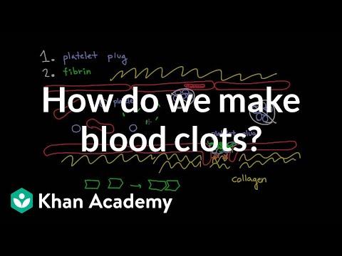 How do we make blood clots? | Human anatomy and physiology | Health & Medicine | Khan Academy