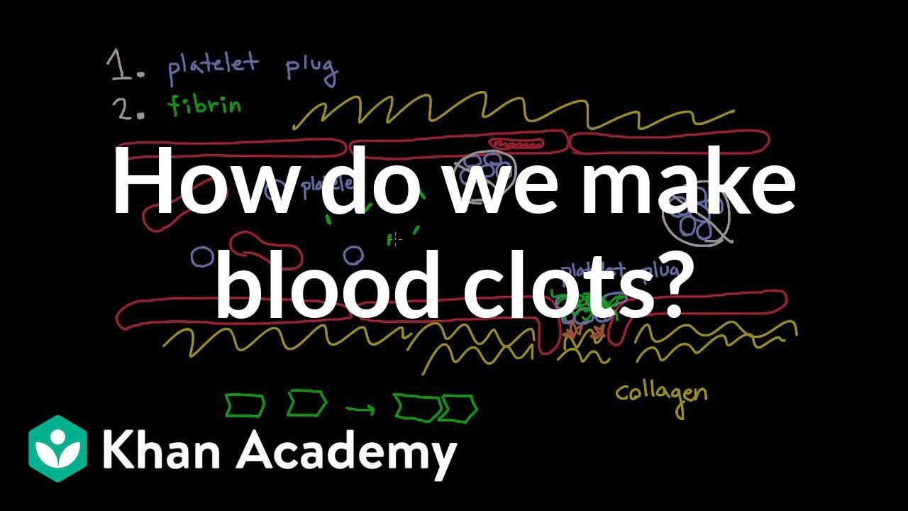 How do we make blood clots? | Human anatomy and physiology | Health ...