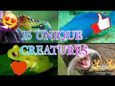 15 UNIQUE ANIMALS THAT YOU WON'T BELIEVE EXIST YouTube