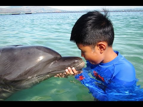SUBIC DOLPHIN ENCOUNTER PHILIPPINES