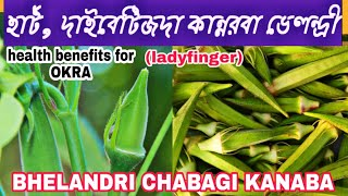 Health care news [25] || Health benefits for Okra (ladies finger) || Bhelandri chabagi kanaba