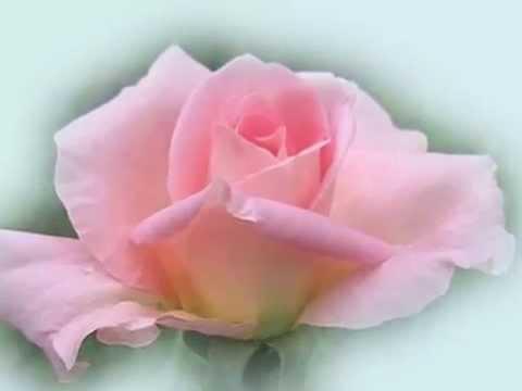 Anna Maria Cherchi  e le Rose - Yamaha psr Can&39;t help falling in love