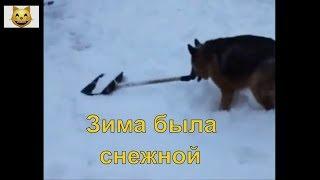 Снежная зима  - Животные, Кошки, Собаки.  Интересная подборка