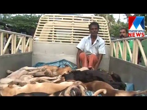 Stray dogs killed in Aluva  Manorama News