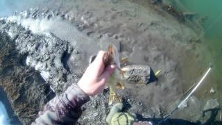 видео Ловля на спиннинг весной обь: ловля весенней щуки в заливе реки оби на спиннинг