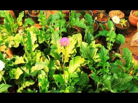 Royal Garden, Flower nursery, Thamarassery
