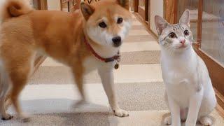 犬より「持ってこい」や「お座り」が上手にできてしまった猫