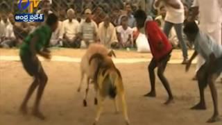 Sankranti Celebration Grandly Held Across Andhra Pradesh: A Report