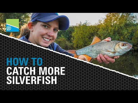 HOW TO Catch More Silverfish!