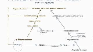 Renin & Hypertension