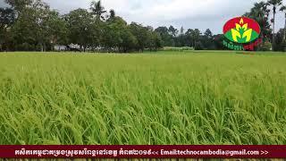 khmer24vn