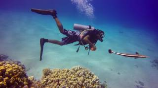Diving  in Sharm el Sheikh May 2017