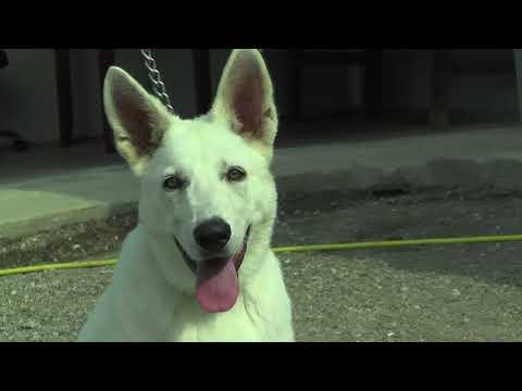 Kako da nametnete volju vašem psu (2021) | Foci