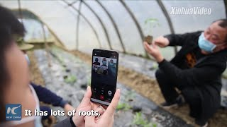Agricultural experts live stream gardening courses to villagers in Hunan, China