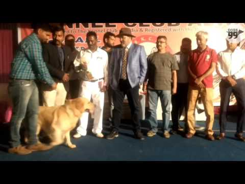 Alwar Dog Show | Results - 25th March 2017| Dogs99.com