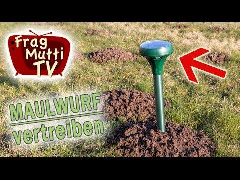 Maulwurf Vertreiben 3 Tipps Frag Mutti Tv