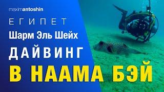 Даи винг в Наама бэи Шарм Эль Шейх Египет Diving in Naama Bay Sharm El Sheikh Egypt