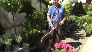 In the Garden: Watering Your Plants