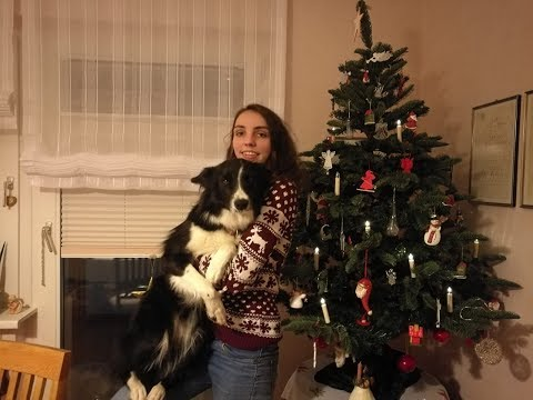 hunde-weihnacht:-das-fest-mit-border-collie-gael- -bescherung-wanderung-hückeswagen-reiten-pferd