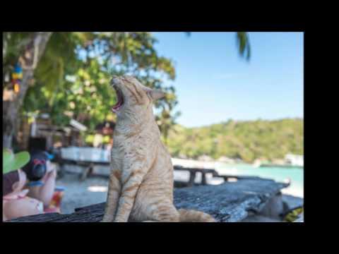 Introducing Rayaburi resort