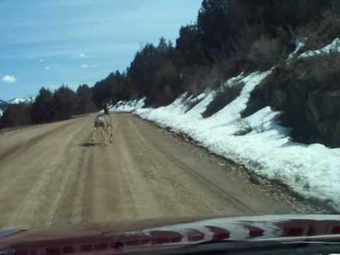 Swan Valley Deer