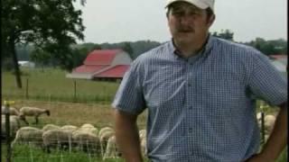 Sheep Farm Tour