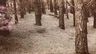 PJ Harvey feat. Thom Yorke - This Mess We