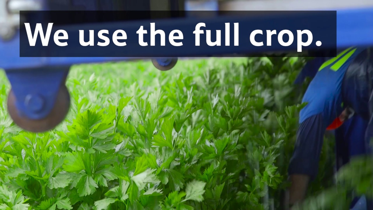 Food Waste: Using bumper crops - Tesco