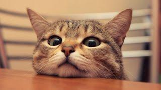 Подборка неудачных прыжков кошек. Эпичные фейлы и приколы про котов