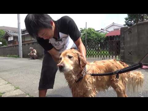 犬の洗い方:濡らすのは足下から