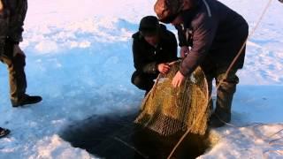 Рыбалка на налима(Знакомство со старинной традицией ловли налима, обустройство ловушек., 2015-02-21T14:27:53.000Z)