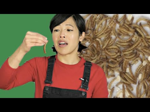 First Time Eating a LIVE Bug & How to Dehydrate Mealworms | BUGMAS 2018 Day 2