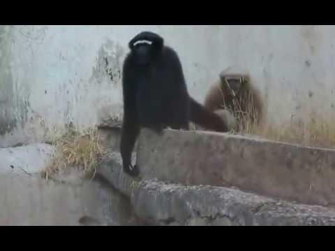 National Zoological Park- New Delhi, India