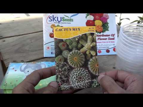 How to Grow Cactus From Seeds | How to Start Cactus Seeds |