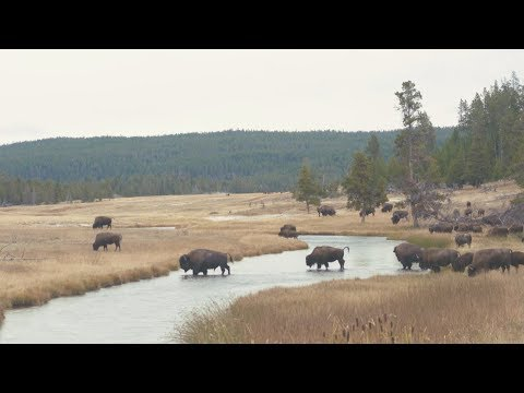 Fly Fishing in Yellowstone National Park on National Public Lands Day