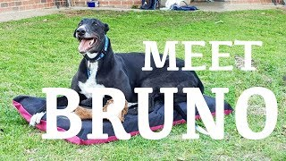 I Adopted A Rescue Greyhound!