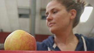 Шведский стартап «спасает» непроданные фрукты (новости)