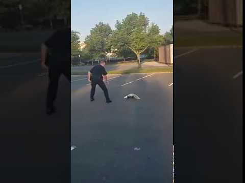 The Mo & Sally Show - Police Officer Helps Skunk Get Cup Off Of It's Head And Gets Sprayed