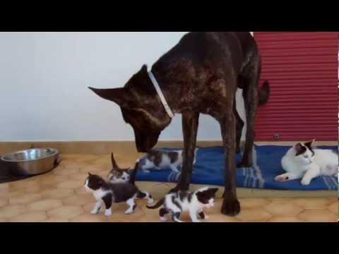 Black: il cane che accudisce i gatti
