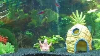 Aquarium kaufen Tipps und Tricks