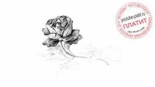 Как нарисовать красивую розу простым карандашом поэтапно за 24 секунды(Как нарисовать картинку поэтапно карандашом за короткий промежуток времени. Видео рассказывает о том,..., 2014-07-17T06:23:46.000Z)