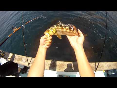 Sportfishing Western Pride 1/2 Day Boat