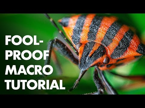 7 Foolproof Steps for a Perfect Macro Photo thumbnail