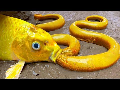Amazing: 금붕어가 황금 뱀과 화려한 뱀장어를 잡는다 Stop Motion Cooking ASMR 스톱모션 요리 Funny Video