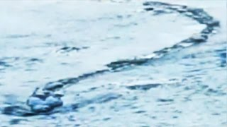 Iceland Lake Monster Footage Authenticated?!
