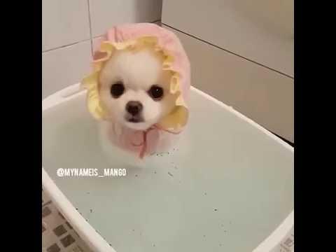 Cute mini dog bathing!