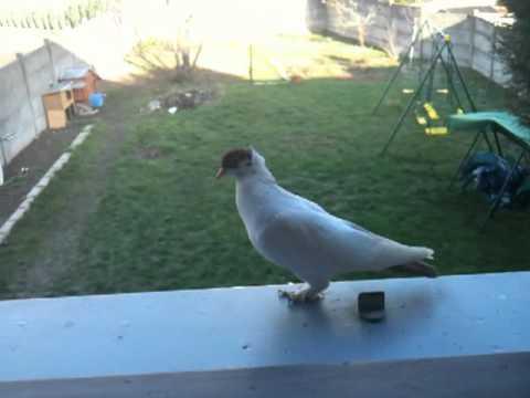 Pigeonnier Fixe En Béton Ou En Bois Pigeon Volefr