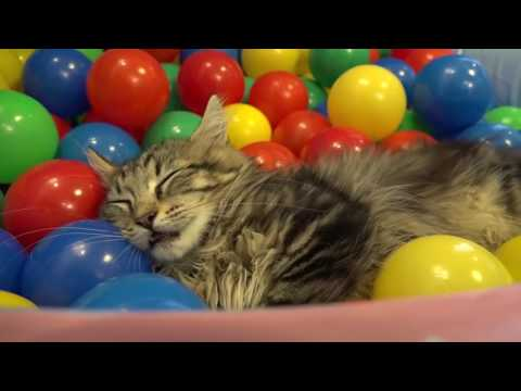10 Кошек играют в бассейне шариками
