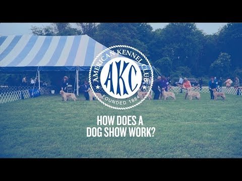 How Does a Dog Show Work?